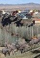 2013 Spring blossoms of Shahr-e Kord 06.jpg