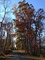 2014-11-02 14 45 41 View west along a wooded portion of Woosamonsa Road during autumn in Hopewell Township, New Jersey.jpg