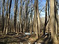 2016-02-08 13 38 01 View north along the Gerry Connolly Cross County Trail between Vale Road and Lawyers Road in Oakton, Fairfax County, Virginia.jpg