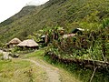 20170904 Papouasie Baliem valley papou village.jpg