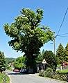 2018-05-21 Rosskastanie in Wolkenstein (Erzgebirge) 03.jpg