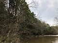 2019-04-13 14 22 50 View south along the Bull Run-Occoquan Trail adjacent to a grove of Eastern Hemlock trees between the Yellow Trail and the Red Trail within Hemlock Overlook Regional Park, in southwestern Fairfax County, Virginia.jpg