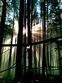 29012014(024) Утро в лесу.jpg