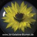 3d-Gelatine-Blume Sonnenblume 1.png