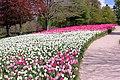 41700 Cheverny, France - panoramio.jpg