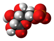 Space-filling model of the 6-phosphogluconolactone anion