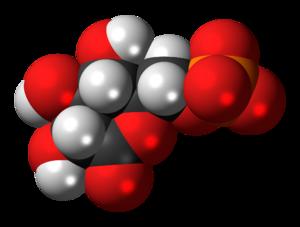 6-Phosphogluconolactone - Image: 6 Phosphogluconolacton e anion 3D spacefill