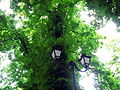 80-382-0088 Kiev Grushevskogo Park 001.jpg