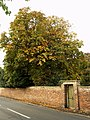 A Hedon Horse Chestnut Tree - geograph.org.uk - 582559.jpg