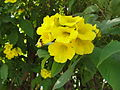 A close up of yellow flower.JPG