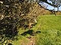 A field alongside the footpath from East Saunton Farm to North Lobb - geograph.org.uk - 2126289.jpg