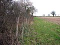 A field boundary hedge - geograph.org.uk - 1088345.jpg