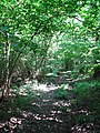 A path in Foxley Wood - geograph.org.uk - 895712.jpg