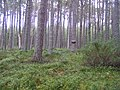 Abernethy Forest Nature Reserve - geograph.org.uk - 560276.jpg