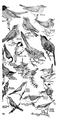 Accompany Manual of Bird Study-0005.png