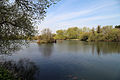 Across Hooks Marsh Lake at Fishers Green, Lee Valley, Waltham Abbey, Essex, England 01.jpg