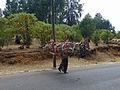 Addis Abeba-Collines d'Entoto (8).jpg