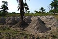 Agriculture in inland valleys in Benin - panoramio (32).jpg