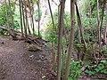 Agua entre las ramas - panoramio.jpg
