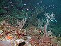Akumal Scuba Diving (4317047691).jpg