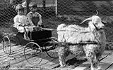 AllianceNebGoatCart1910s.jpg