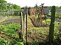 Allotment gardens in early May - geograph.org.uk - 1290704.jpg