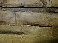 Altxerri cave - Bison 2.jpg