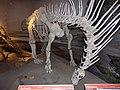 Amargasaurus, MEF Trelew 02.JPG