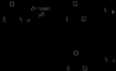 Amidase - Wikipedia