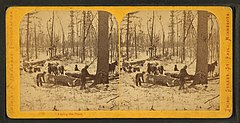 Among the pines, by Zimmerman, Charles A., 1844-1909.jpg