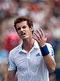 Andy Murray Why (2).jpg