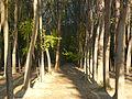 Ankaranın ağaç.JPG