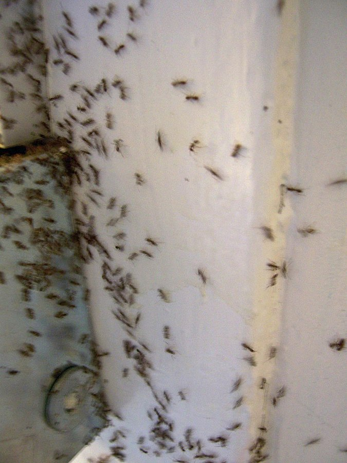 Ants in an Apartment Building