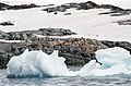 Antarctica(js) 24.jpg