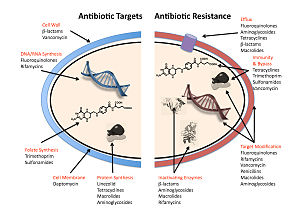 Infographic showing mechanisms for antibiotic resistance