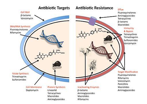 Antibiotic resistance mechanisms