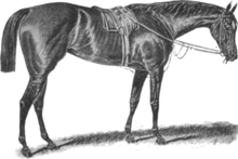 Apology (horse).png