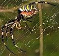 Arachnids ... (3883200851).jpg