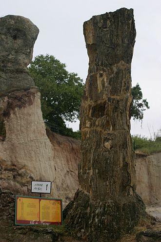 Hacinas - One of the fossilized trees of Hacinas