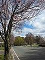Arlington neighborhood landscape in Spring.jpg