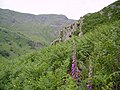 Ascending Great Howe - geograph.org.uk - 192506.jpg
