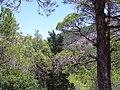 Ataviros, Greece - panoramio (12).jpg