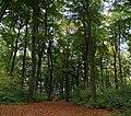 Auf dem Burgberg - panoramio.jpg