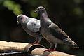 Austin Roberts Bird Sanctuary-023.jpg