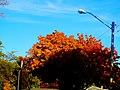 Autumn Colors in Madison - panoramio (15).jpg