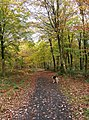 Autumn colours in Wyre Forest - geograph.org.uk - 1577832.jpg
