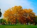 Autumn in Warner Park - panoramio.jpg