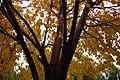 Autumn in iran پاییز در ایران- استان قم 03.jpg