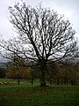 Autumn nudity - geograph.org.uk - 1566805.jpg