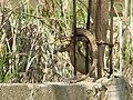 Awkward Iguana... (3641198987).jpg
